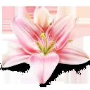 Курс дизайнер-флорист